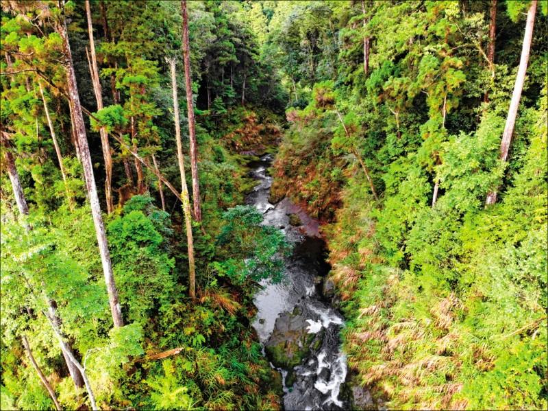 「水漾森林」新河道兩岸為堅硬岩壁,未見侵蝕。(嘉義林管處提供)