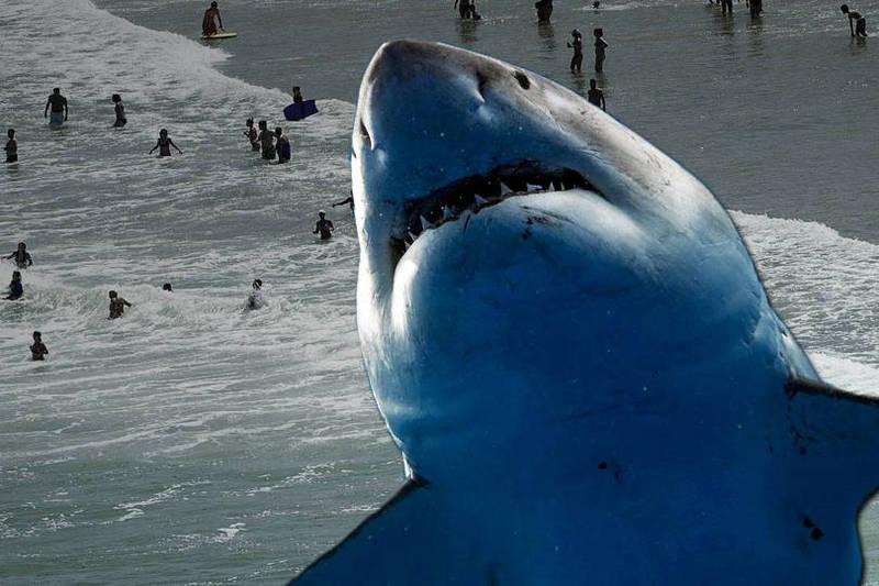 該男子的大腿骨盆處被鯊魚咬傷,在他們急救後,男子仍命危。(本報合成)