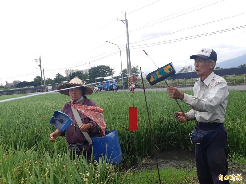 80多歲的林姓老農夫妻在稻田施放沖天炮趕鳥,竟引來5名官警取締。(記者黃明堂攝)
