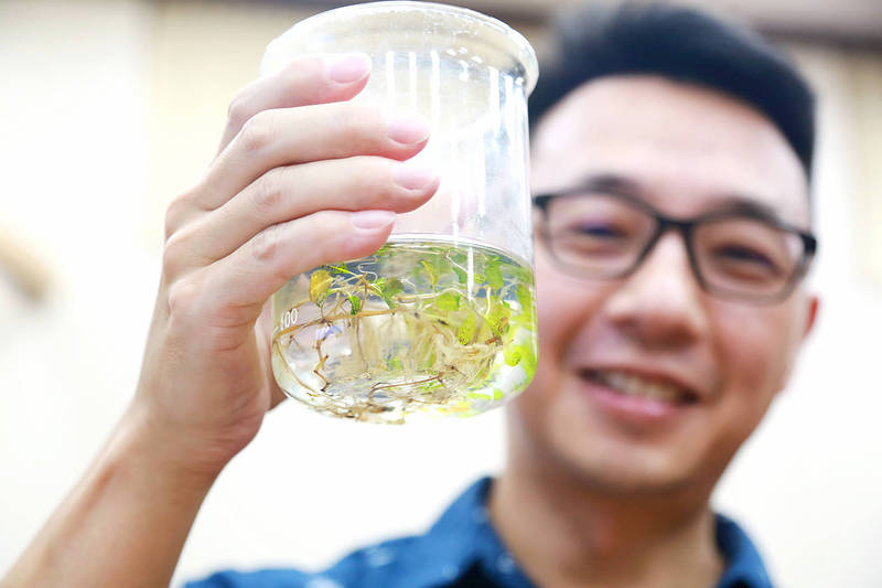Vanson Liu, an assistant professor in National Sun Yat-sen University's Department of Marine Biotechnology and Resources, holds a jar containing a sample of seagrass at a news conference yesterday. Photo: CNA