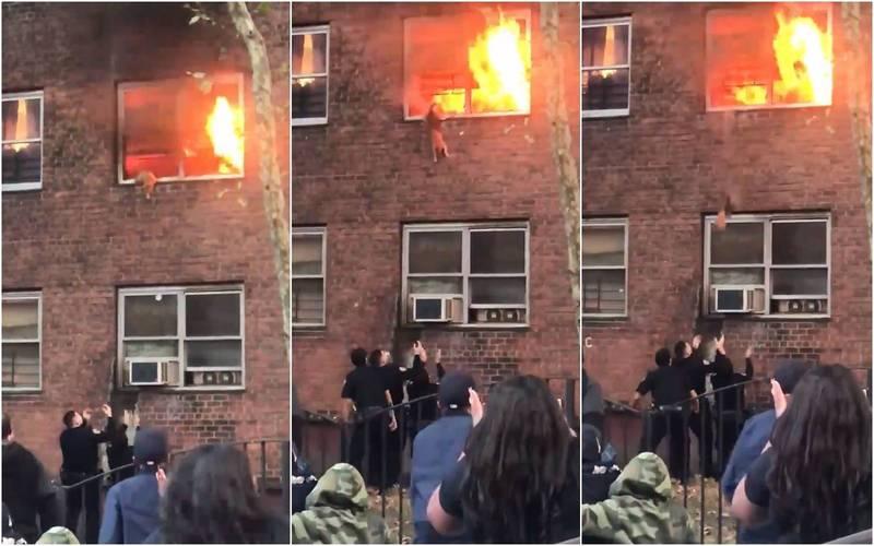 紐約一棟公寓日前發生縱火案,橘貓被困在2樓火場,經警消人員鼓勵後一躍而下逃生。(圖擷自推特)