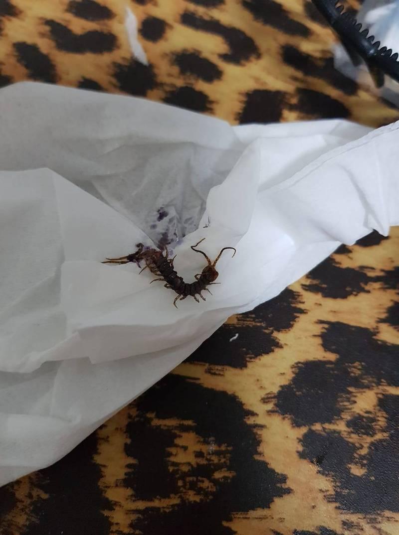 原PO表示,隔天開燈一看,才發現是一隻蜈蚣,她也驚喊「我的媽阿,人生第一次徒手捏蜈蚣」。(擷取自爆怨2公社)