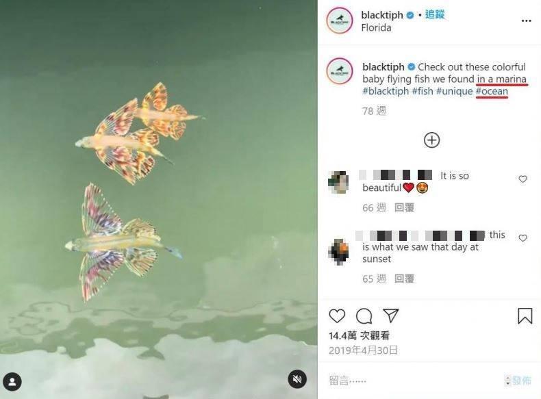 看起來相當瑰麗罕見的魚其實是飛魚的幼魚。(圖擷取自查核中心網頁)