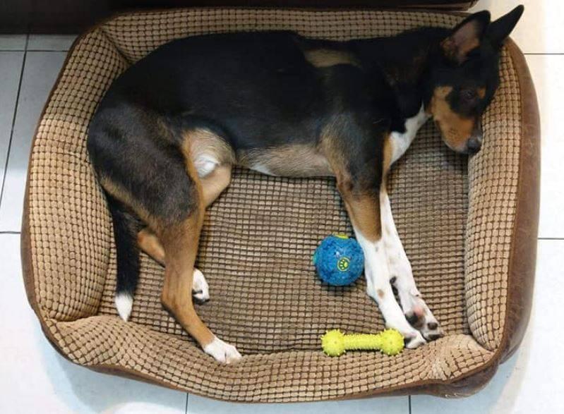 隔了數年狗的體型已經能撐開墊子了。(圖取自臉書社團「爆怨2公社」)