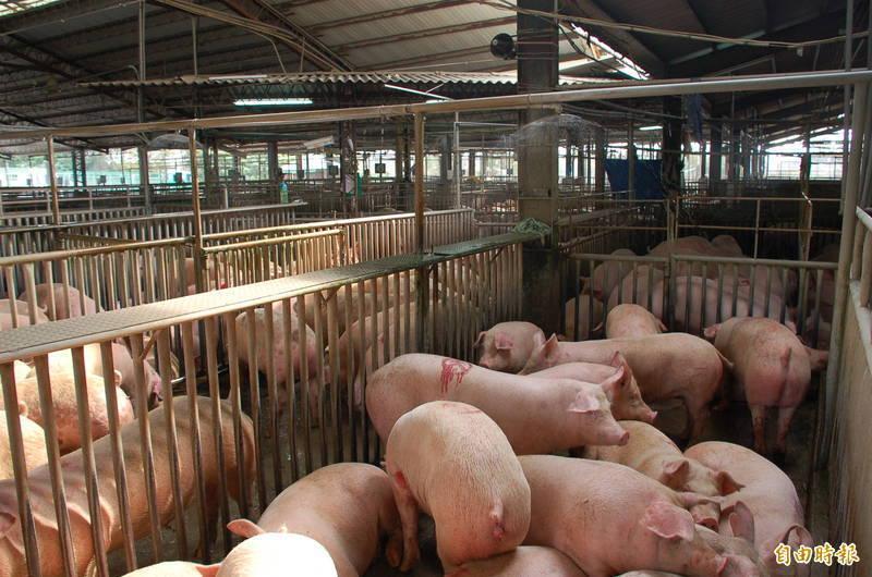 行政院農委會公布,含有萊克多巴胺的美國豬肉最快也要在2021年的1月1日才會開放進口。(資料照)