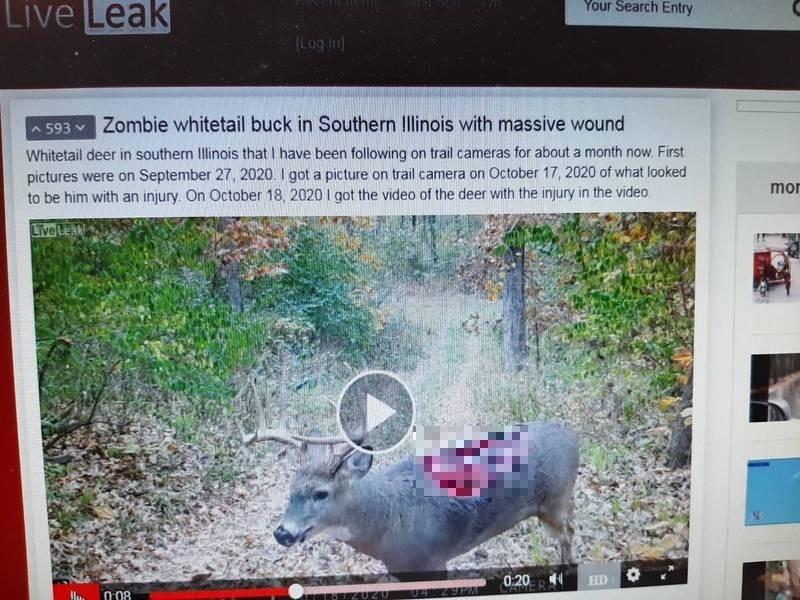 美國一名網友在伊利諾州拍到恐怖影像,只見一隻野鹿背上有大面積恐怖傷口。(翻攝LiveLeak)