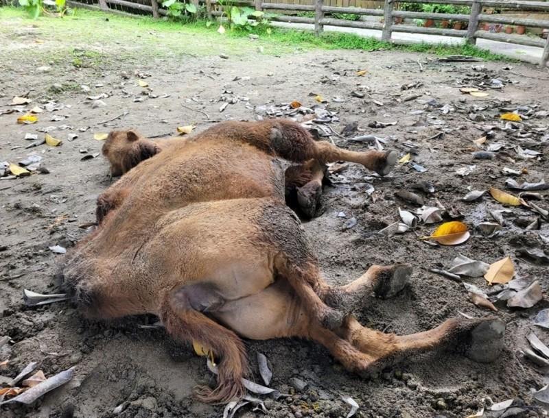 議員楊靜宇調閱資料發現,除食蟻獸逃跑外,台北市立動物園內動物死亡率年年攀新高。(楊靜宇提供)