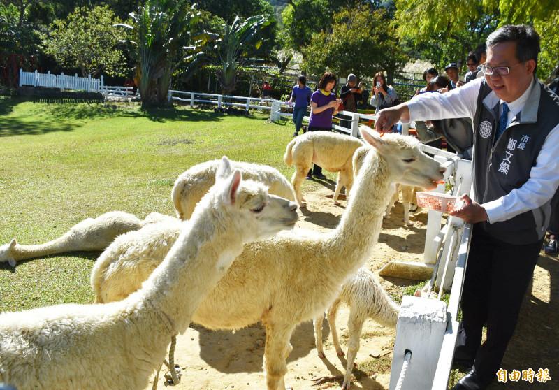 富田香草休閒農場受歡迎的餵養動物體驗,圖為超萌的草泥馬,讓近距離接觸餵食的鄭文燦越餵越開心。(記者李容萍攝)