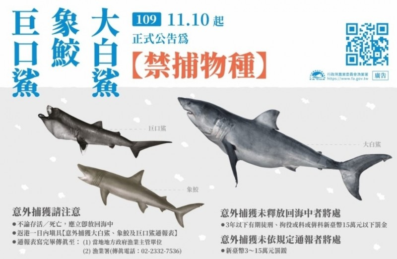 農委會公告即日起大白鯊、象鮫及巨口鯊列為禁捕物種。(漁業署提供)