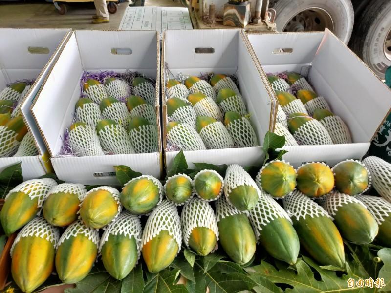 顆顆嚴選的南投優質木瓜,正式進軍香港市場。(記者佟振國攝)
