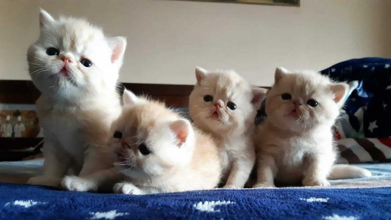 剛出生時的「加菲貓」。(游清提供)