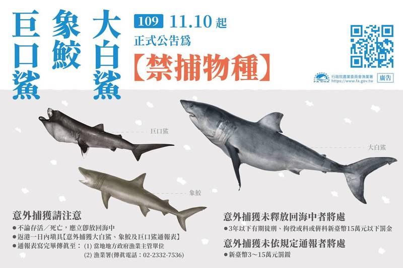 「大白鯊象鮫及巨口鯊漁獲管制措施」即起正式實施。(圖擷取自_行政院農業委員會漁業署)