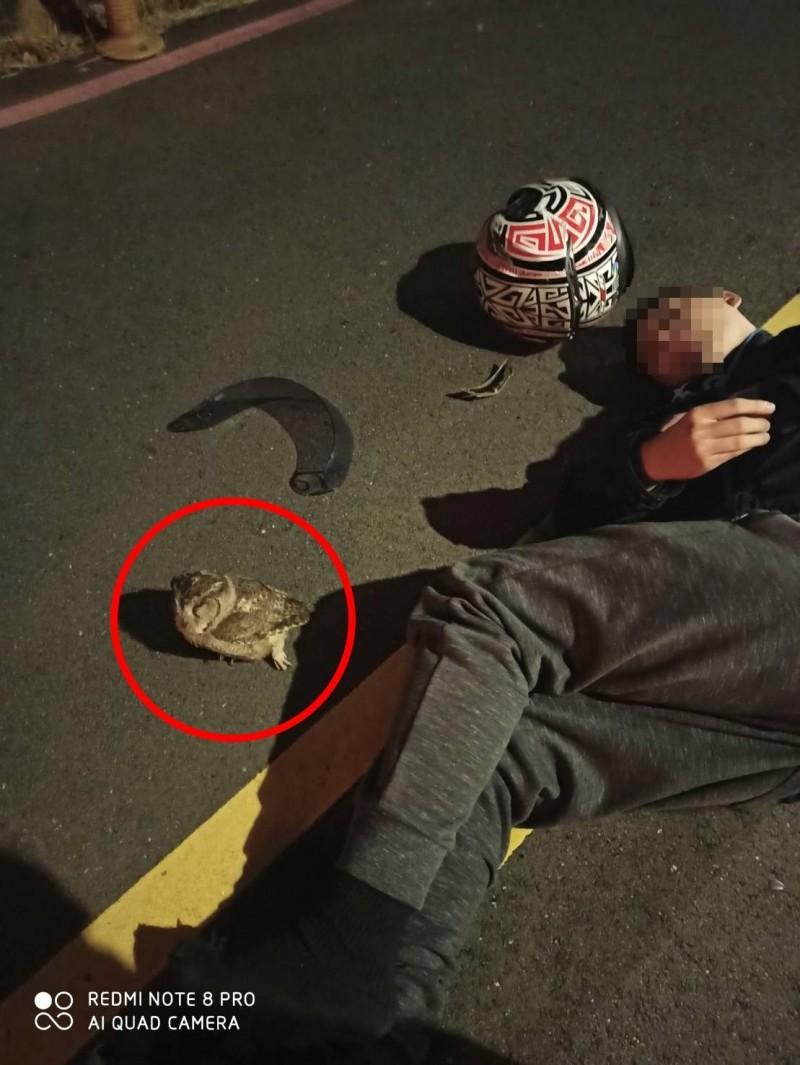 王男摔車倒地,肇事的另一方竟是貓頭鷹。(記者徐聖倫翻攝)