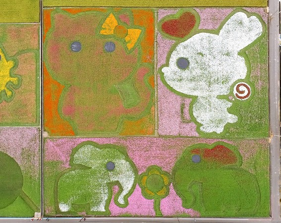 桃園花彩節大溪場以「動物樂園」主題設計創意花海,集合超萌動物的圖騰,有大象、兔子、貓、熊和長頸鹿等花卉圖騰。(大溪區公所提供)