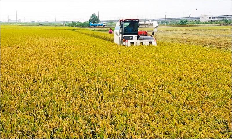 台南市部分二期稻作日前已開始收割,但一期稻能否順利供灌,預計25日會議做出建議方案、月底前拍板 。(資料照)