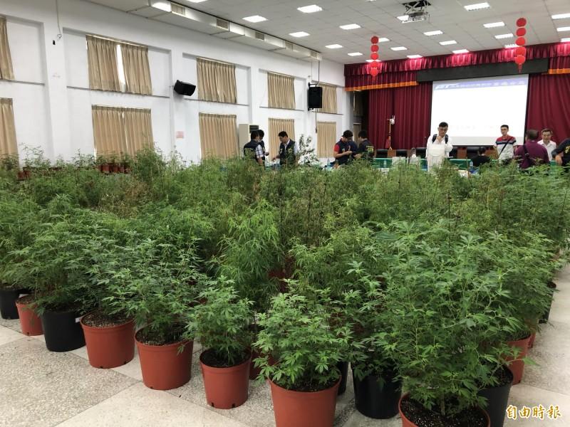 警方起出500餘株大麻。(記者羅欣貞攝)