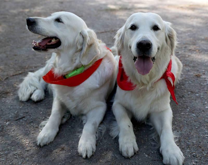 中國雲南省威信縣近日發布禁止遛狗通告,規定所有市民飼養的狗隻都必須是栓養或圈養,若未按照規定會給予警告、罰款,第3次遛狗被發現,將予以捕殺。示意圖。(歐新社)