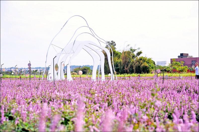 「2020桃園仙草花節」將於11月28日至12月13日登場,目前開花6成。 (市府農業局提供)