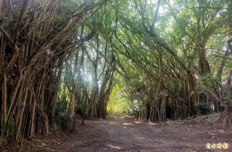 台南官田區隆田舊營區改造為「大隆田文化生態園區」,保留現有樹林區。(記者楊金城攝)
