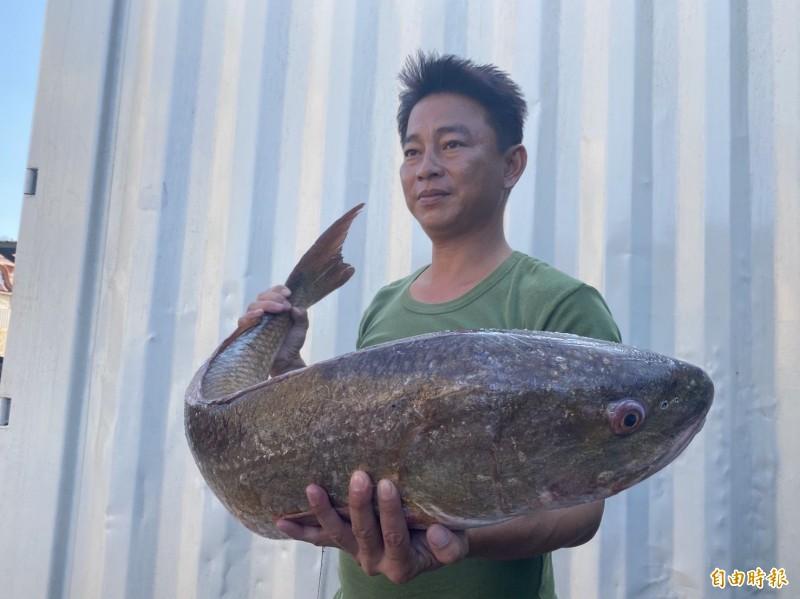 住在金沙鎮大地村的吳姓漁民,抱起重約12公斤的紅鼓魚。(記者吳正庭攝)