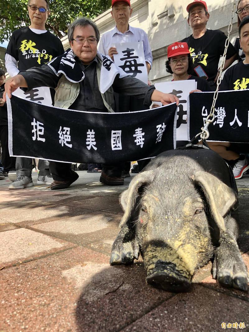 參與秋鬥的團體昨天記者會時、頂著30度高溫就拉著一頭黑豬上場,豬隻現場被嚇到尿失禁,台灣動物社會研究會呼籲勿將活體動物作為抗爭示威工具,痛批秋鬥團體就是在「虐待動物」。(資料照)