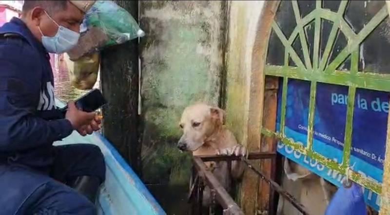 墨西哥海軍日前在受災區展開救援行動時,無意間發現一隻泡在洪水中無助發抖的拉不拉多犬。(圖截自「Secretaría de Marina」臉書影片)