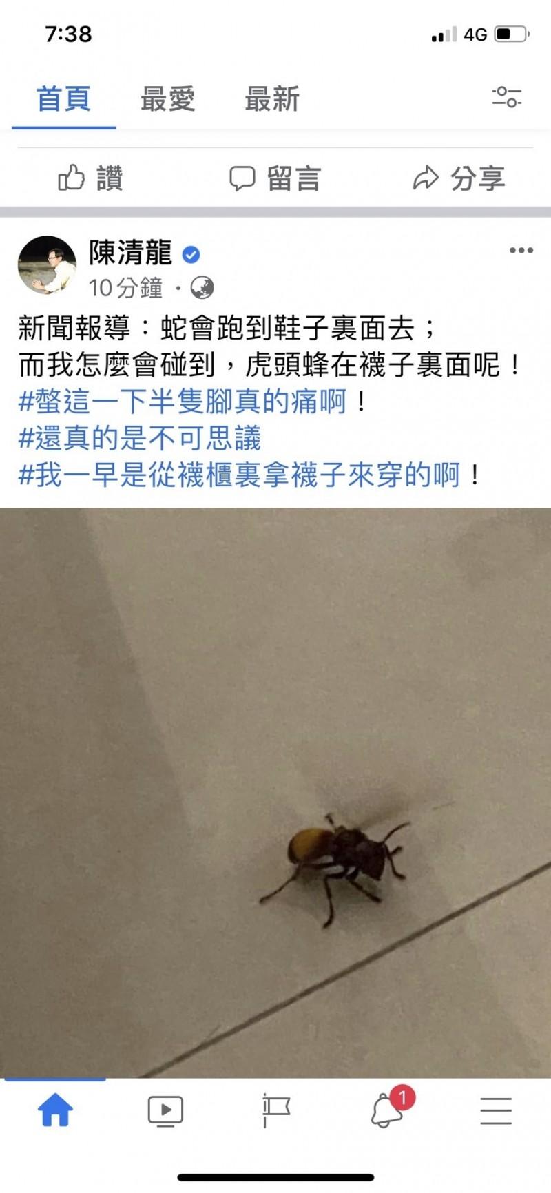 台中市議員陳清龍今天穿襪時不小心被躲在襪中的虎頭蜂螫傷,讓他大感不可思議。(擷取自臉書)