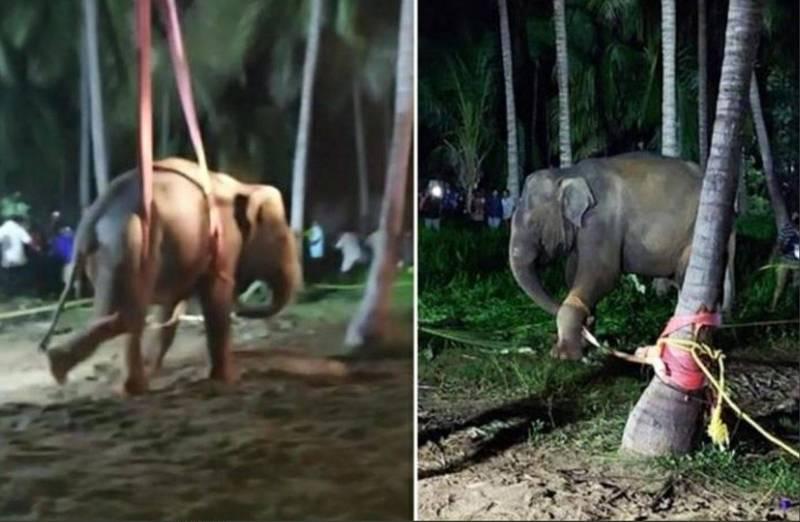 印度一頭母象落入一口農業用井裡,當局動用起重機才把牠救出來。(圖截取自推特Jaisree)