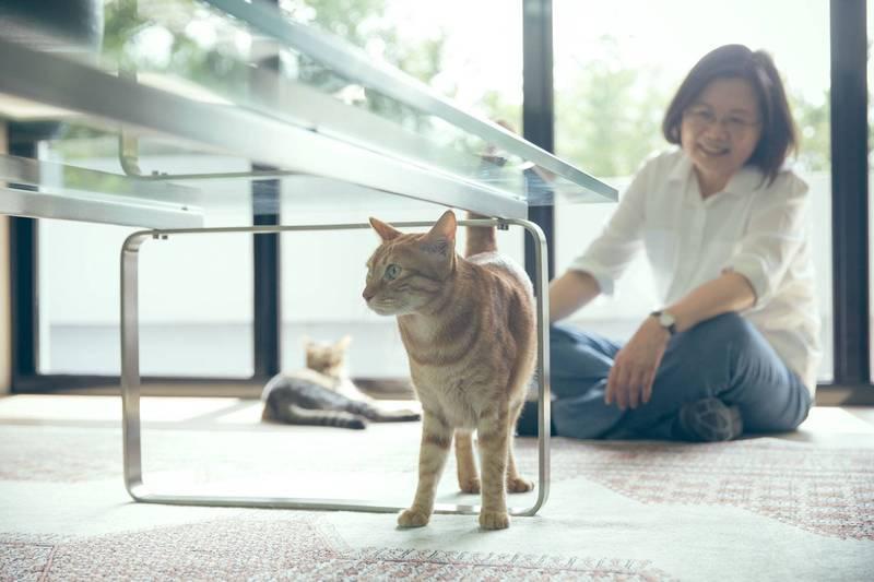 有貓咪就給讚! 小英曬與愛貓合照 曝計畫邀大家做公益