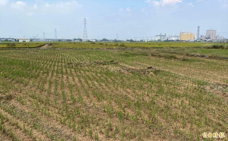 嘉南地區一期稻作評估停灌面積為1萬8千公頃。(資料照)