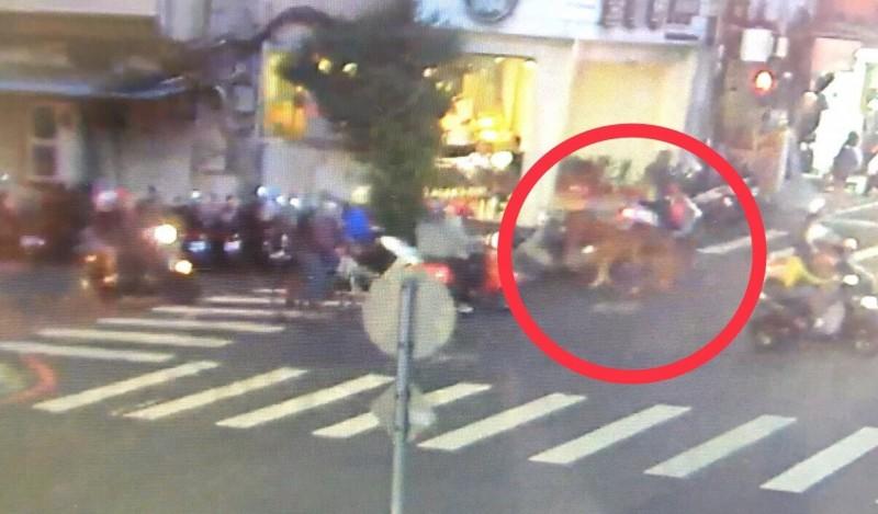 路口監視器拍下王姓教練遛馬的有趣畫面。(記者徐聖倫翻攝)