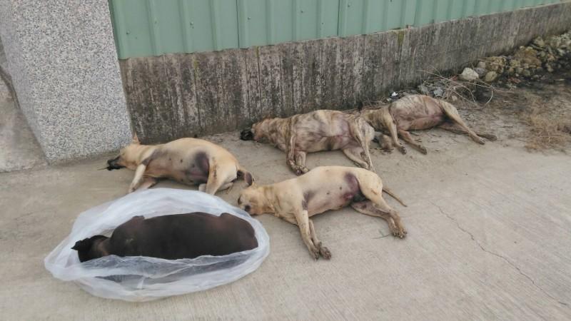 流浪犬誤食「奪命肉包」集體暴斃。(圖:鄭姓民眾提供)
