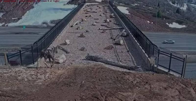 2018年建立的帕雷斯峽谷野生動物立交橋並不是設計給人類通行,而是讓野生動物過路之用。(擷取自猶他州野生動植物資源司FB)