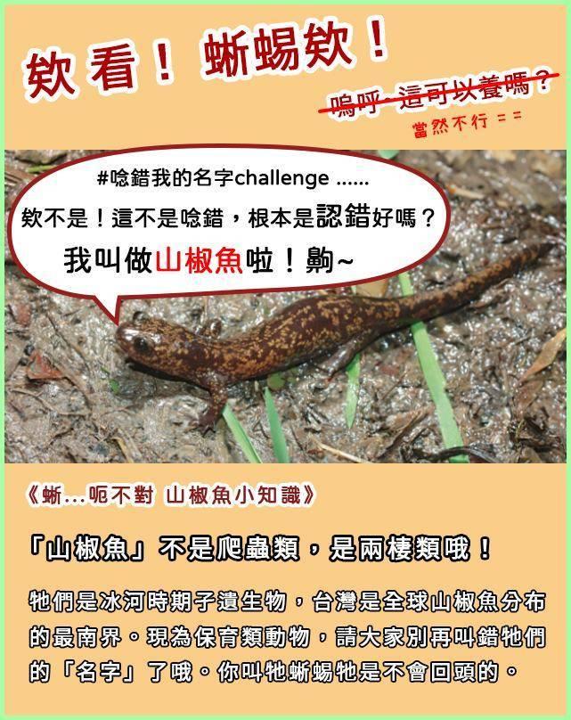 內政部跟上近來網路上所興起的「#打錯我的名字challenge」風潮,專文介紹常被誤認成「蜥蜴」的保育類動物「山椒魚」。(圖擷取自臉書_內政部)