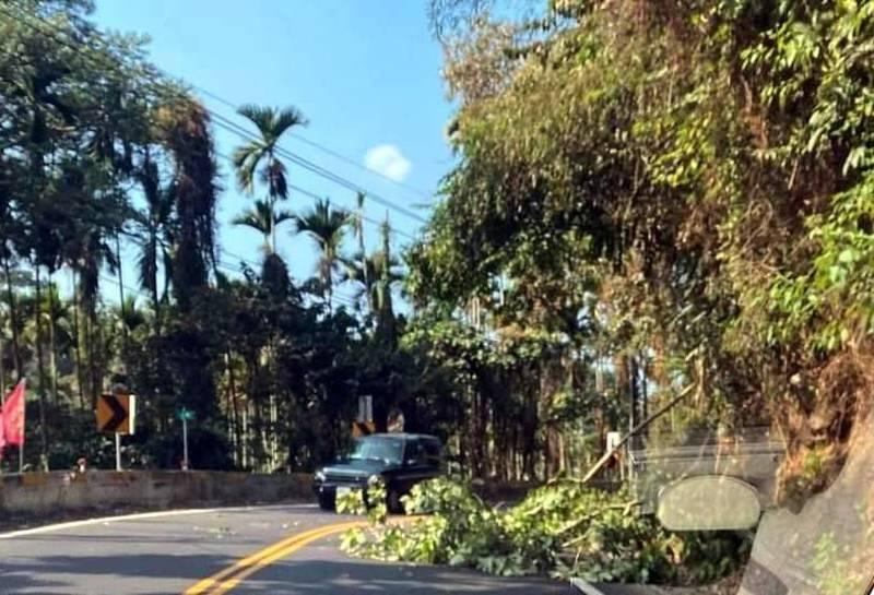 溪頭對外151縣道內湖路段又見雜木倒塌影響交通情形。(記者謝介裕翻攝)