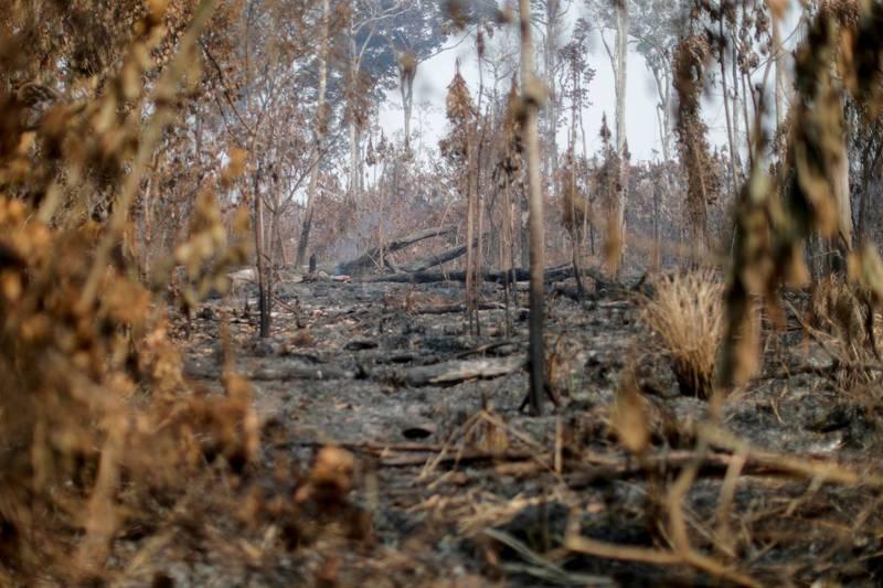2019年8月到今年7月的亞馬遜雨林遭砍伐的面積打破12年來的紀錄。(路透)
