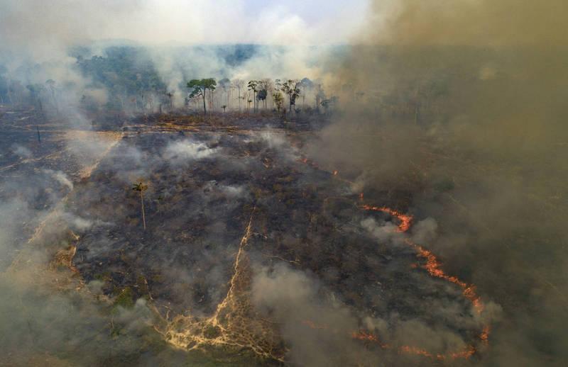 巴西總統鼓勵開發亞馬遜地區。(美聯社)