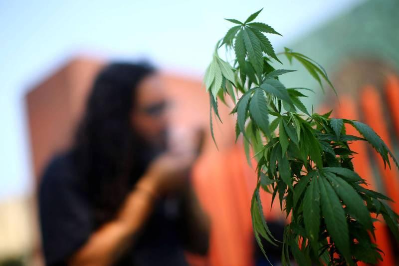 許多歐美國家認定大麻具有高藥用價值,陸續放鬆管制。(路透)