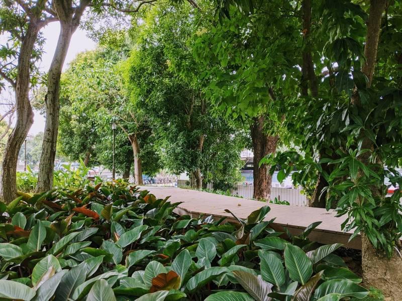 [新聞] 城市新綠洲 台南長興生態公園將啟用