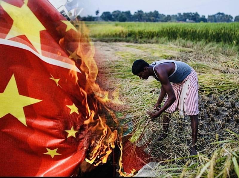 中國今年發生武漢肺炎和洪災,稻穀作物大幅減產、糧食緊缺,印度官員對媒體表示,中國已30年來首度進口印度稻米。(本報合成,彭博、法新社)