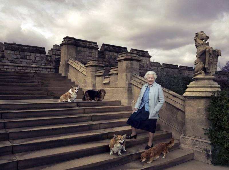 英國女王伊莉莎白二世的愛犬瓦肯(Vulcan)近日逝世,目前女王身邊只剩下1隻名為糖果(Candy)的狗狗陪伴。圖為女王2016年和愛犬拍照,左上Willow、右上Vulcan、左下Holly、右下Candy。(路透)