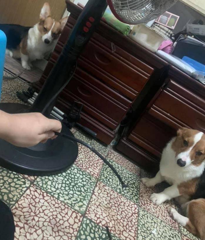 許多網友在看到2隻小狗無辜的臉後,搞笑回覆「一定是電線壞壞」。(圖取自臉書社團「爆怨2公社」)