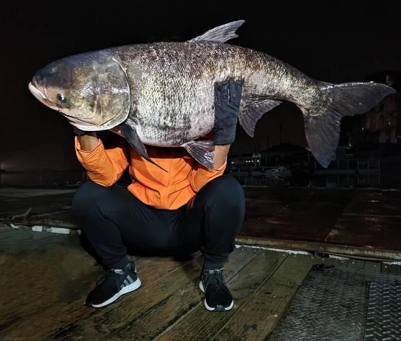 有釣客在日月潭上夜釣,竟然釣到重達42台斤的巨無霸大頭鰱。(日月潭一等高提供)