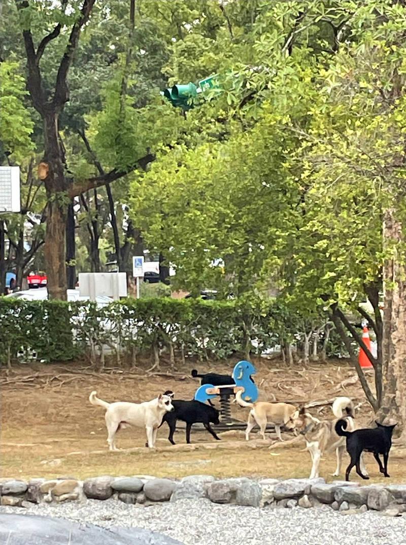 中興新村光華里兒童樂園裡面有狗兒聚集。(史祝賢提供)