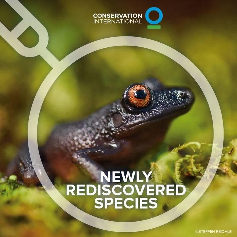 生物學家在玻利維亞安地斯山脈發現先前推定已滅絕的動物「魔眼蛙」,牠身軀偏向黑色,大大的眼睛則是澄紅色,最後1次被目擊是在20年前。(圖擷自Conservation International臉書)
