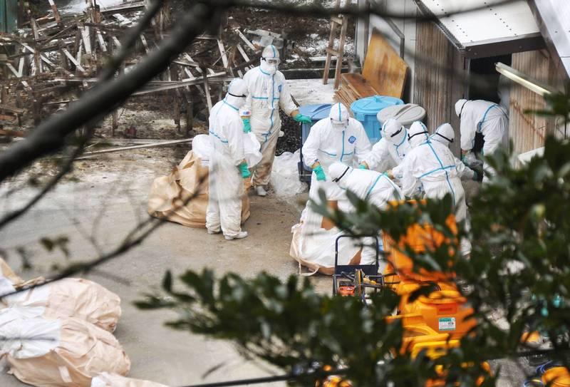 日本禽流感疫情持續擴散,日媒消息指疫情已擴散到第11個縣高知縣,當局為此將撲殺超過3萬隻雞。(路透)
