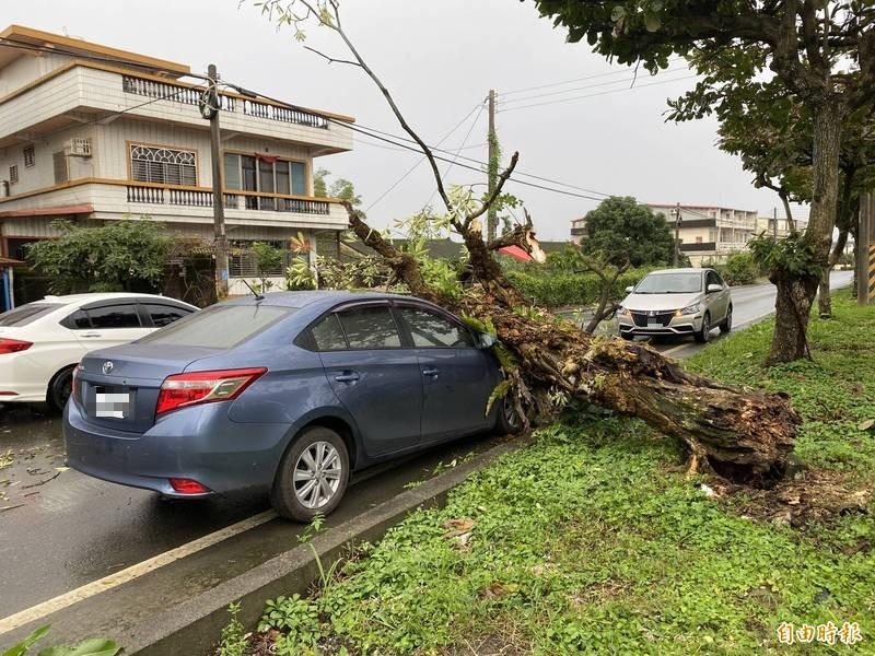 陳小姐將小客車停在路邊後下車,沒想到路樹轟的一聲倒下,砸爛車頭。(記者蔡昀容攝)
