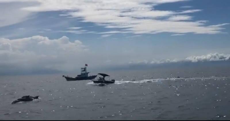 陳男駕駛遊艇騷擾鯨豚,宜檢裁定緩起訴。(記者林敬倫翻攝)