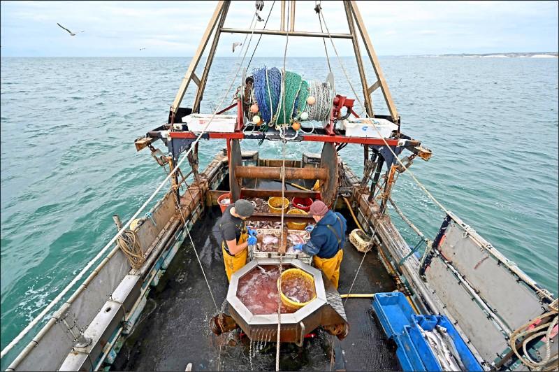 英格兰东南岸的渔民在渔船上分类渔获。(法新社档案照)(photo:LTN)