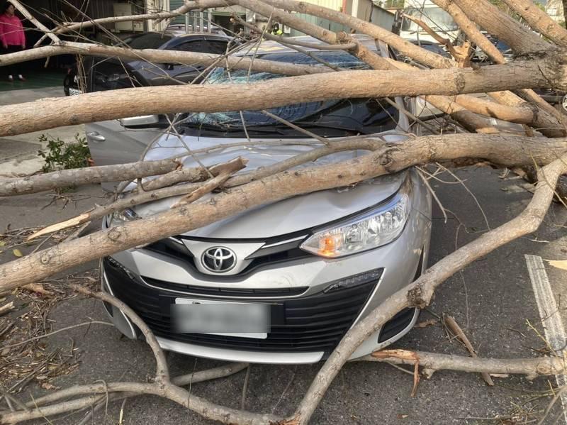 路樹砸在小客車身上,駕駛臉部輕傷。(記者張瑞楨翻攝)